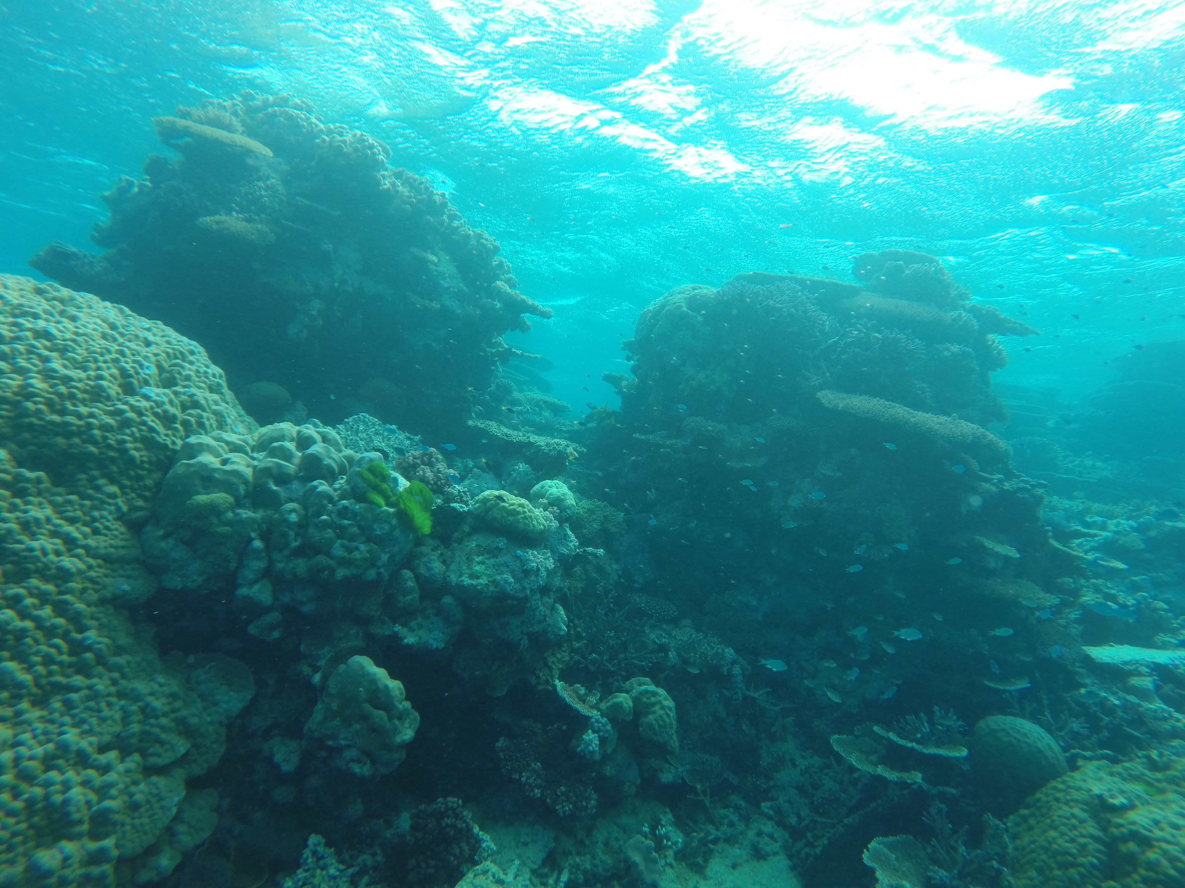 Scuba diving the great barrier reef loveliness - Dive great barrier reef ...